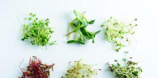 Microgreens mix VFeducation